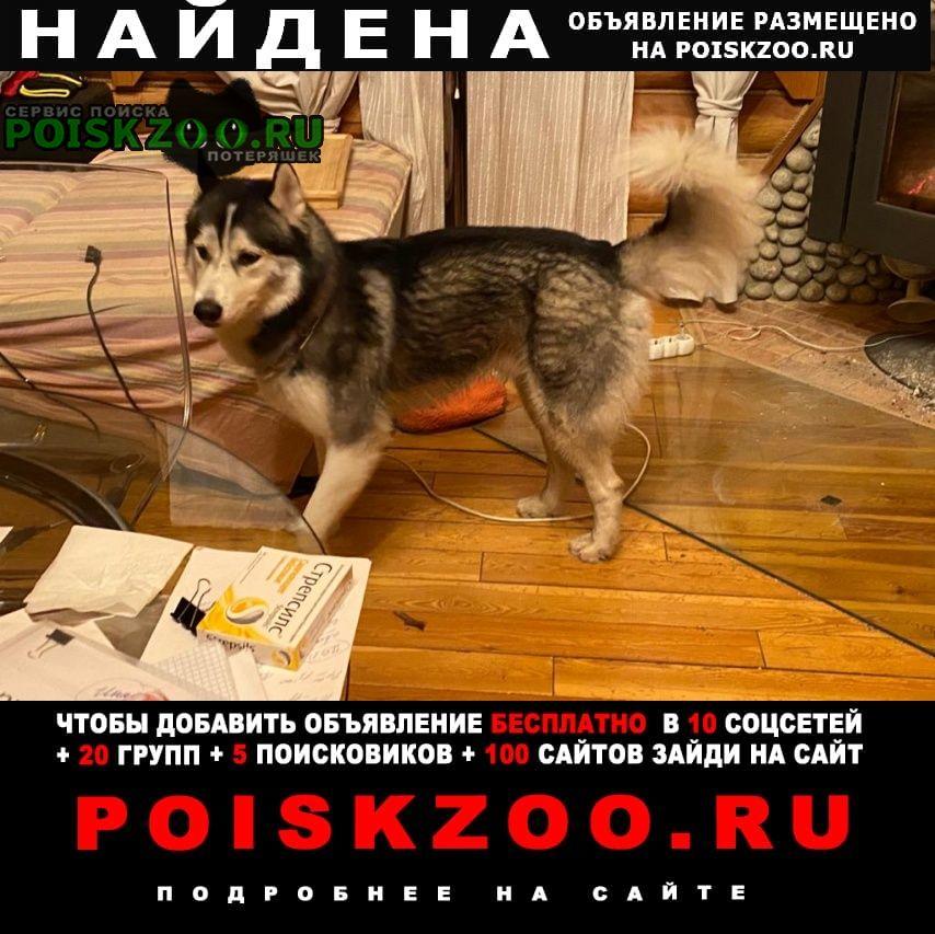 Найдена собака деревня семивраги Домодедово