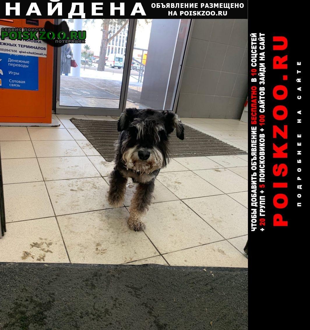 Найдена собака с ошейником Уфа