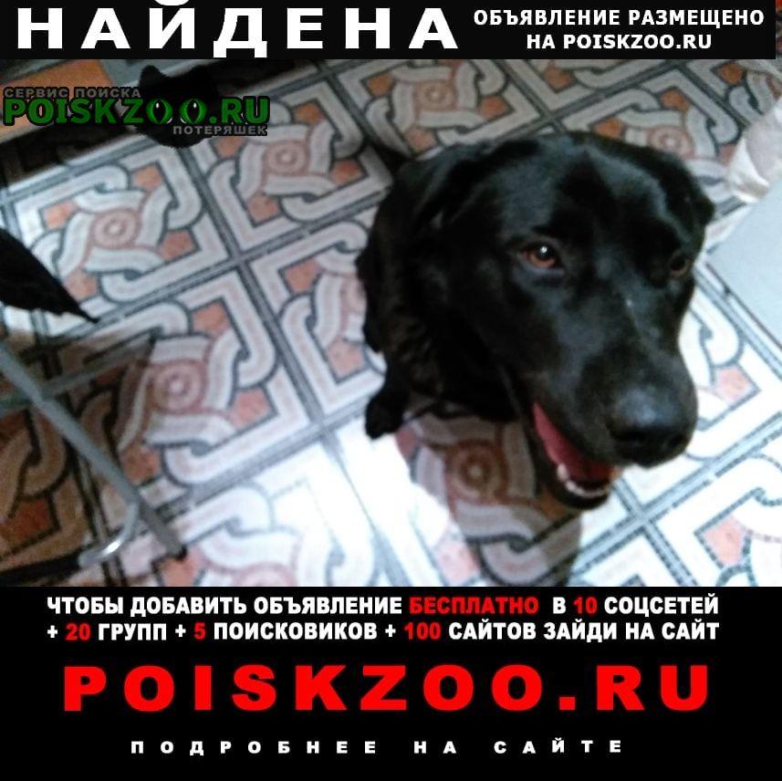 Найдена собака в городе е..г. Обнинск