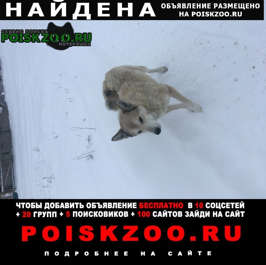 Найдена собака Струги-Красные