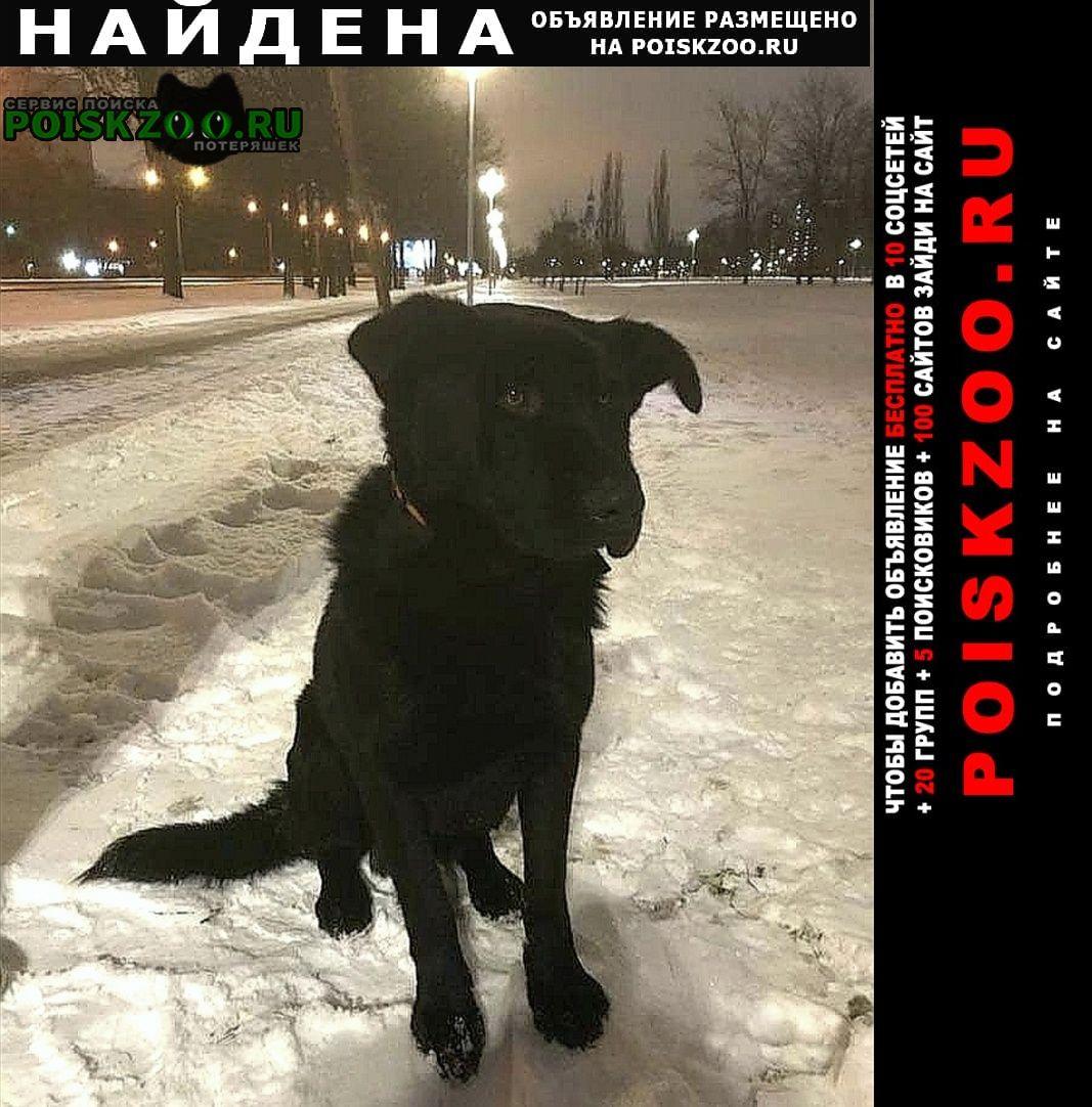 Найдена собака крупный чёрный кобель Санкт-Петербург