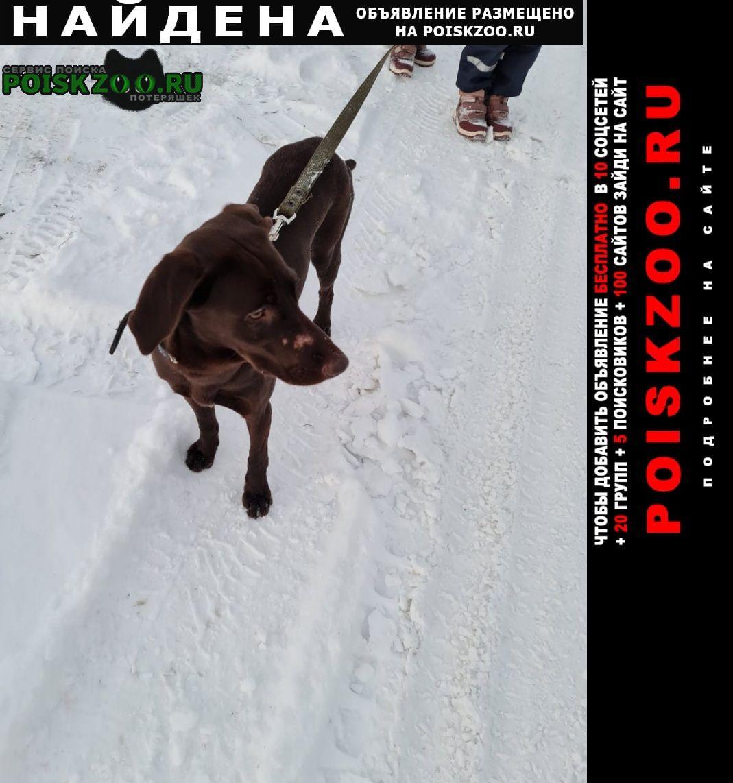 Найдена собака Рязань