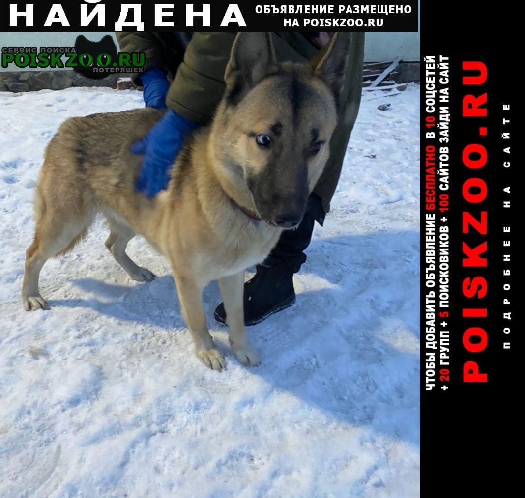 Найдена собака в е Мурманск