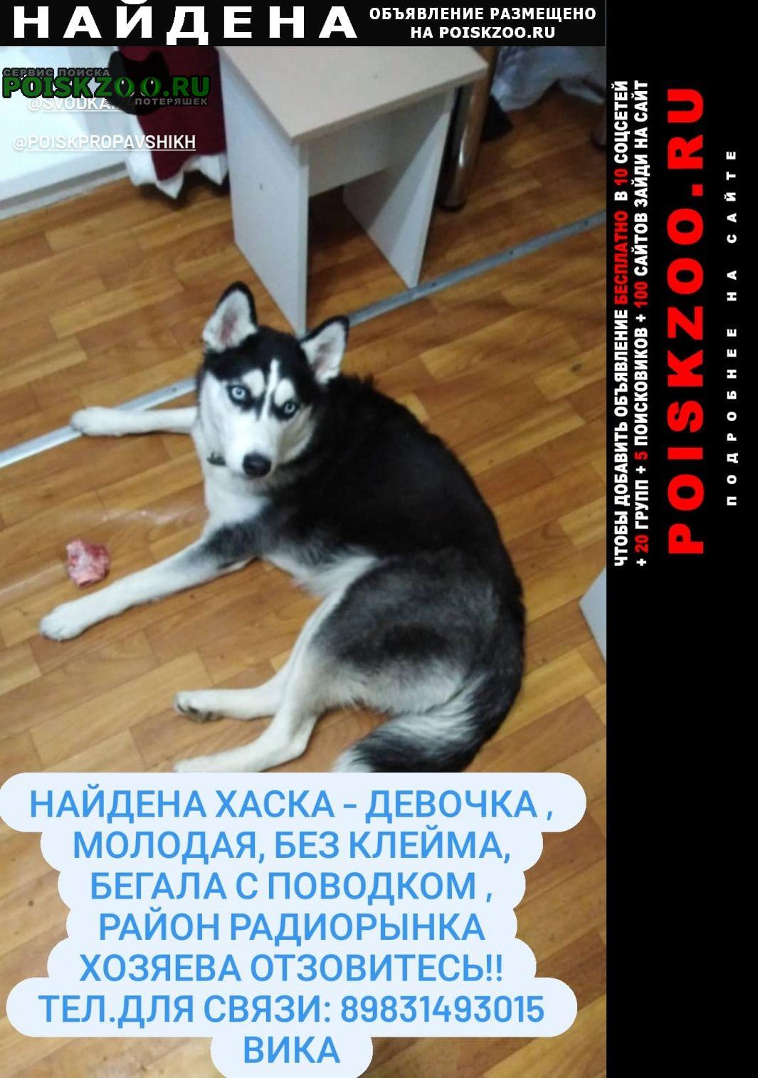 Найдена собака хаска девочка Красноярск