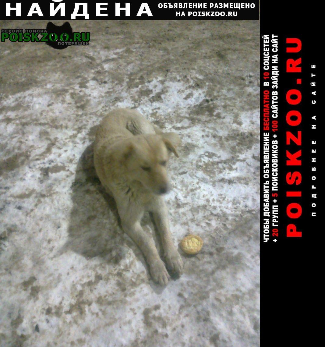 Найдена собака - кобелёк Тверь