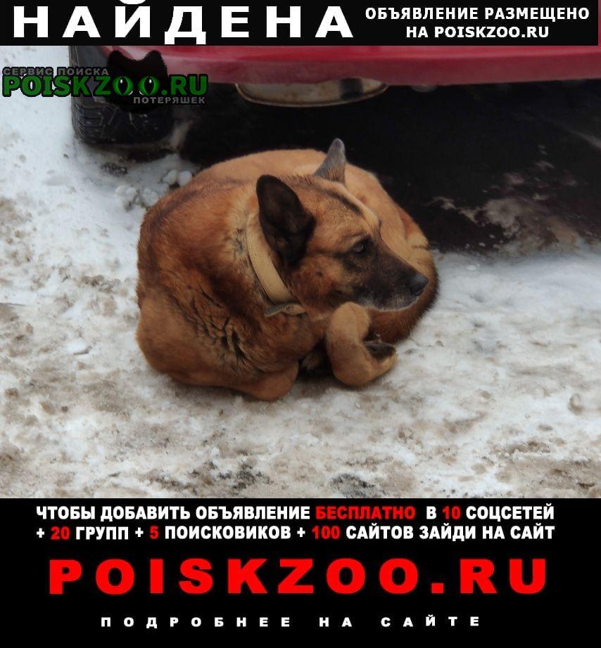 Найдена собака Одинцово