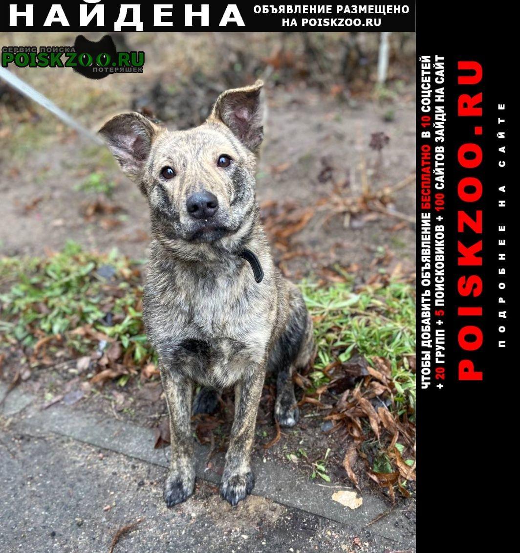 Найдена собака Минск