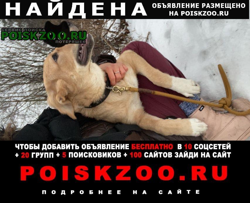 Найдена собака щенок в подушкинском лесу Одинцово