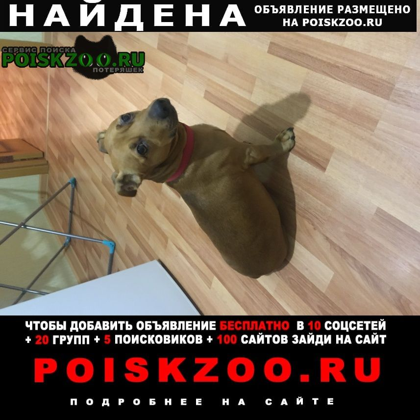 Найдена собака рыжий мальчик Александров