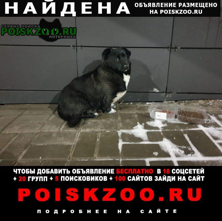 Найдена собака малыш коротколапик Москва