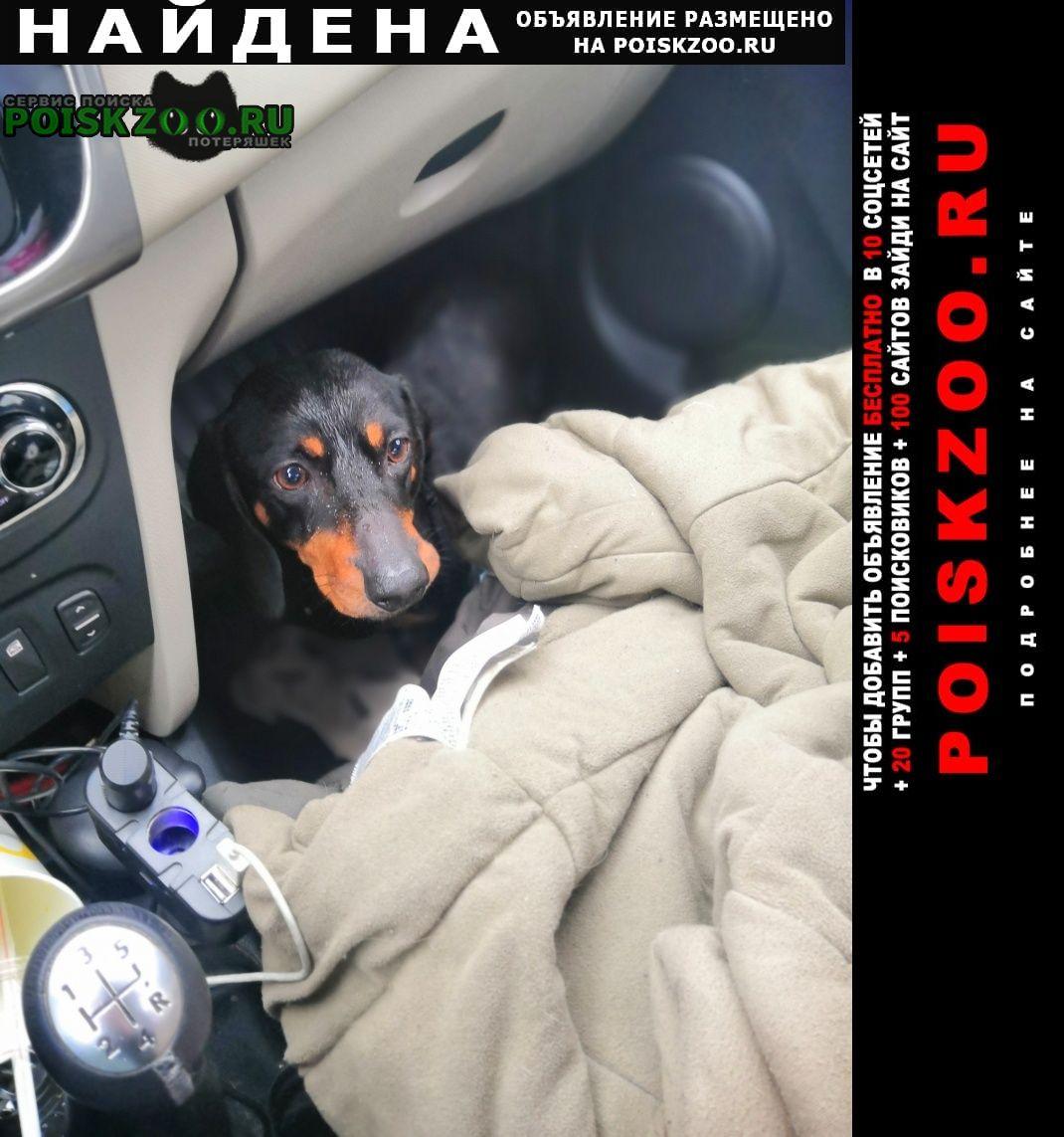 Найдена собака Калязин