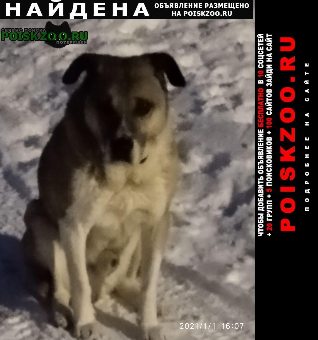 Найдена собака замечен пёс с 1 января Киров (Кировская обл.)