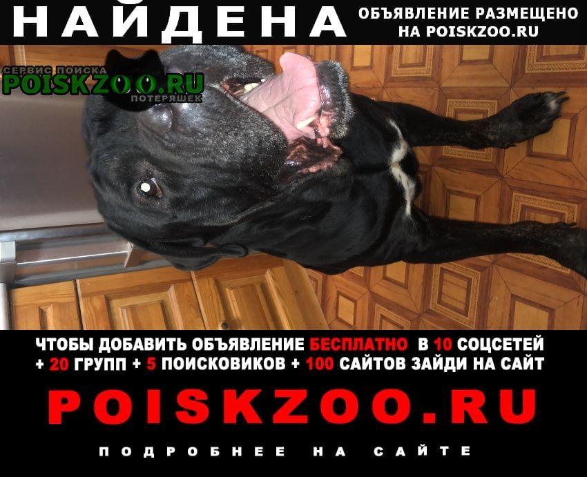 Найдена собака Балашиха