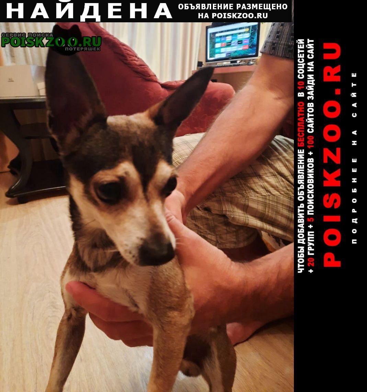Найдена собака Краснодар