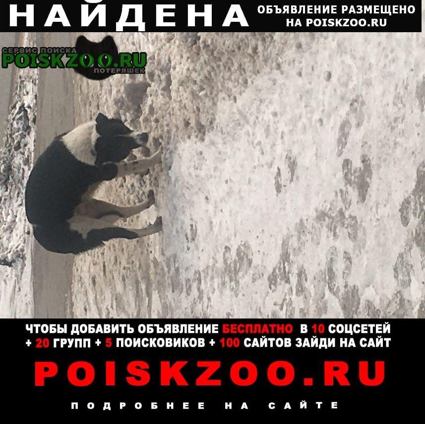 Найдена собака собачка черно-белая ростом по колено. Москва