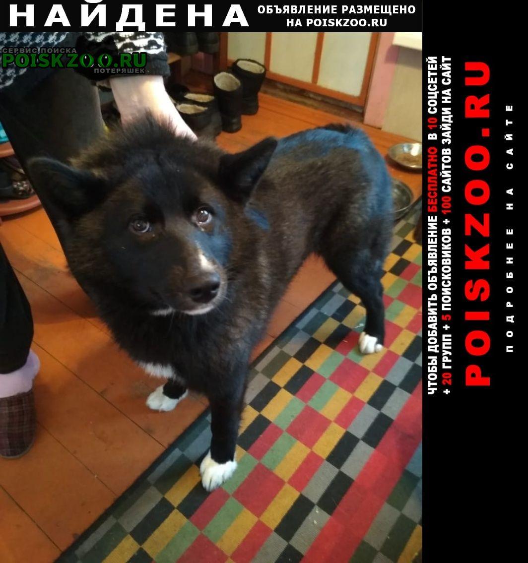 Найдена собака прибилась на дачный участок Луга