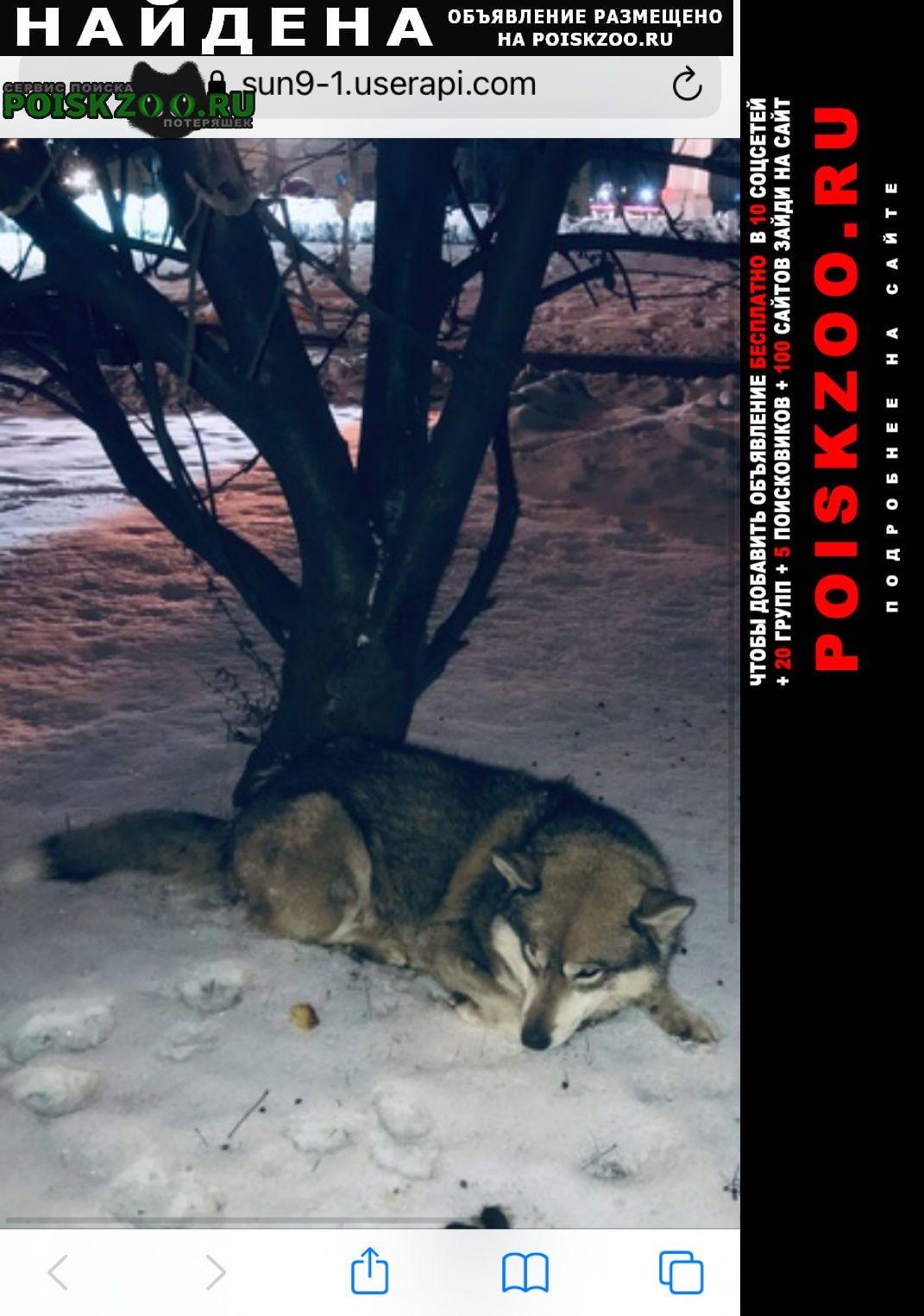 Найдена собака видели собаку лежит на одном месте Тула