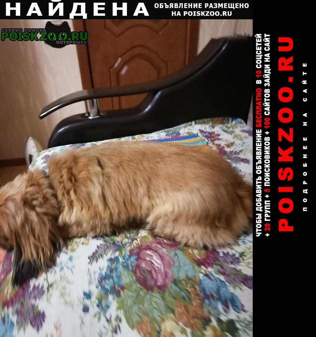 Найдена собака Липецк