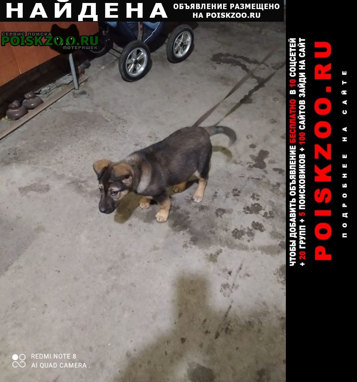 Найдена собака ростов, щенок Ростов-на-Дону