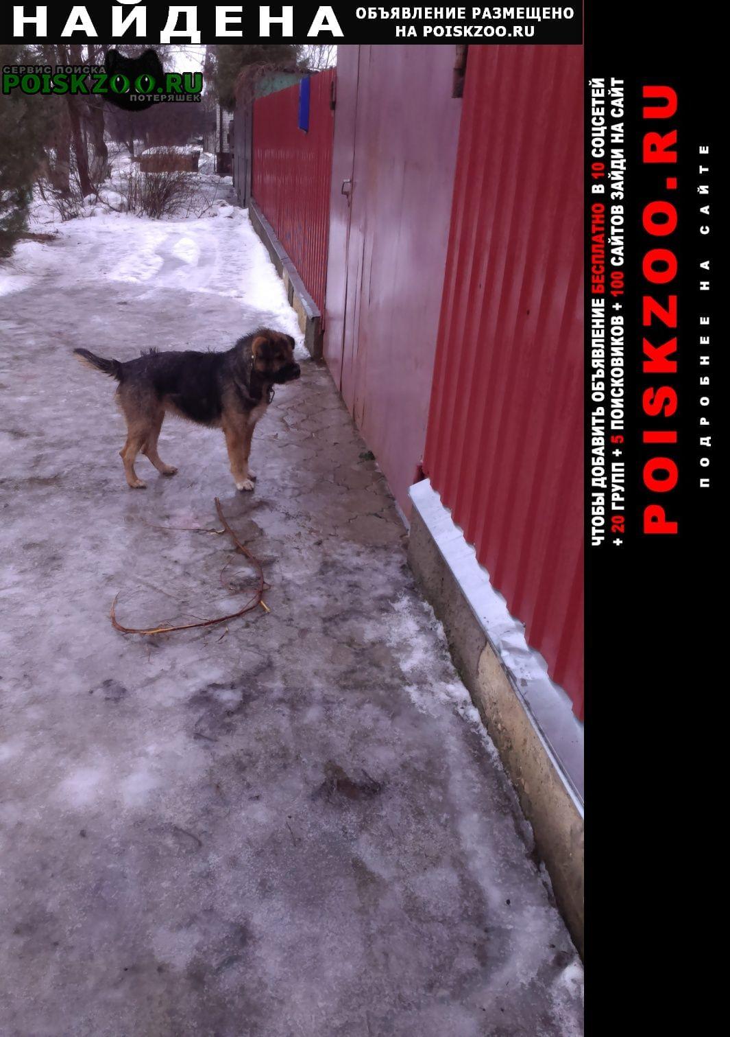 Найдена собака Орел