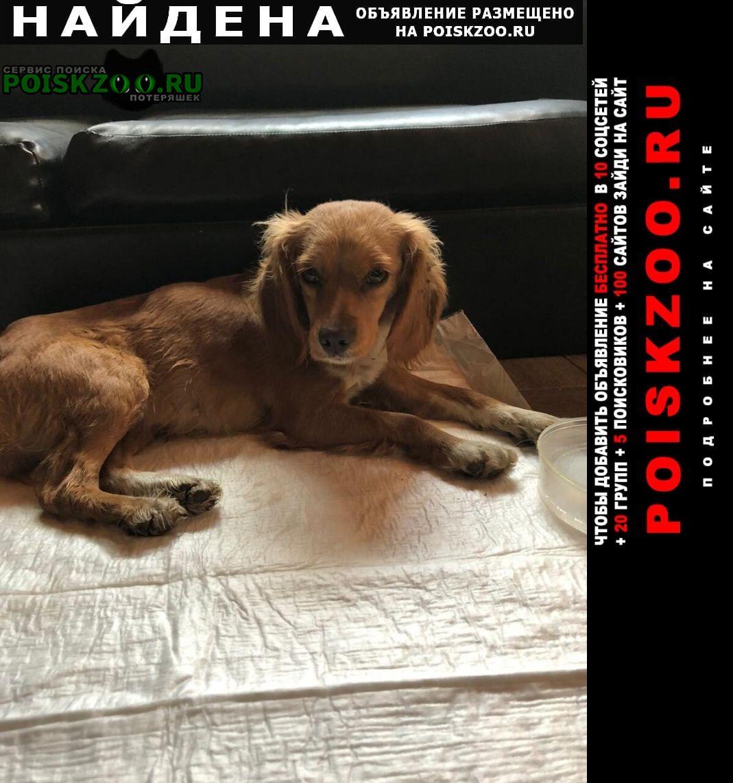 Найдена собака Шахты