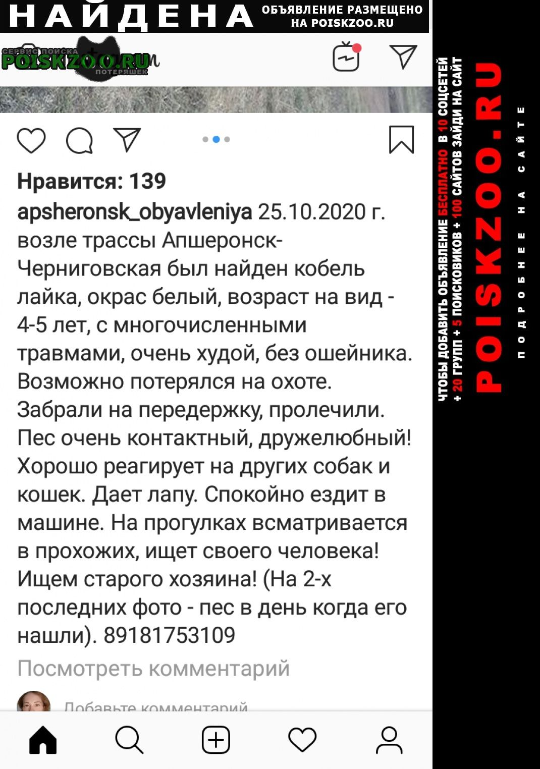 Найдена собака лайка -черниговская Апшеронск