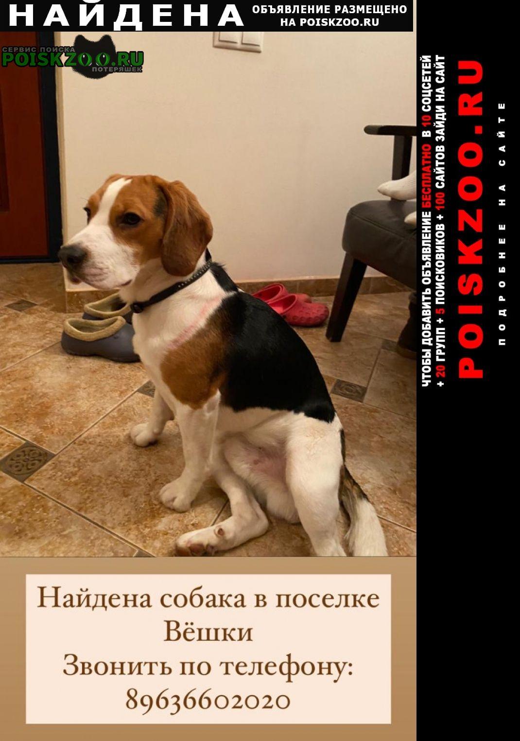 Найдена собака мальчик порода бигль. Москва
