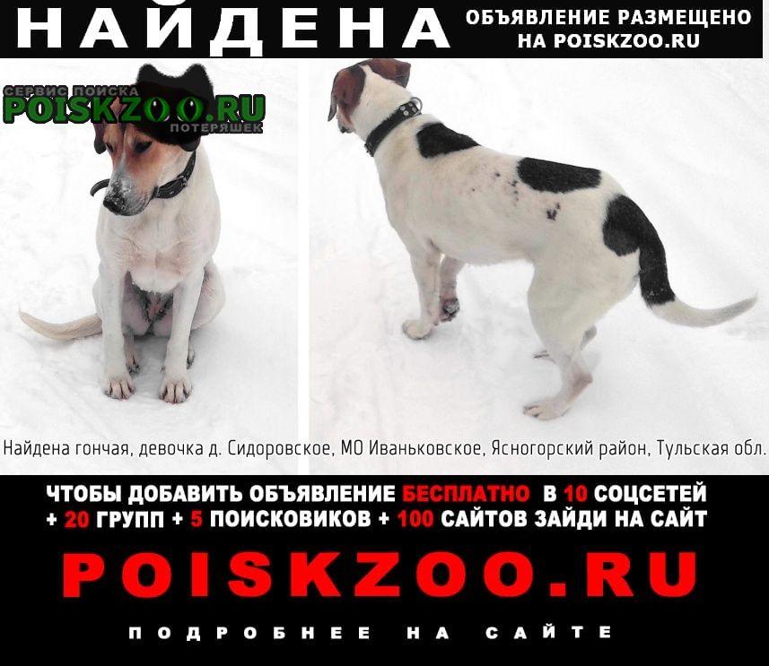Найдена собака русская пегая гончая Ясногорск