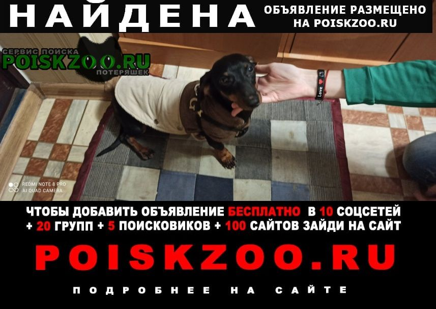 Найдена собака такса Кривой Рог
