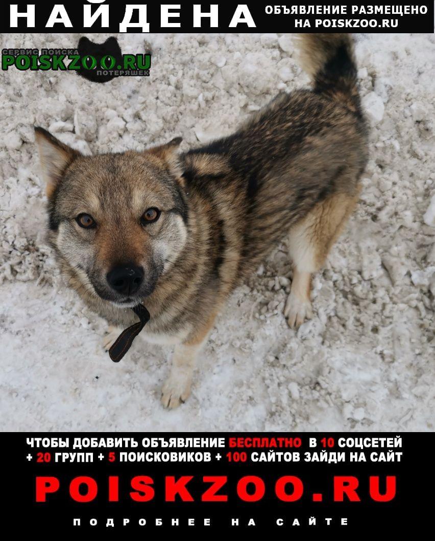 Найдена собака -подросток Казань
