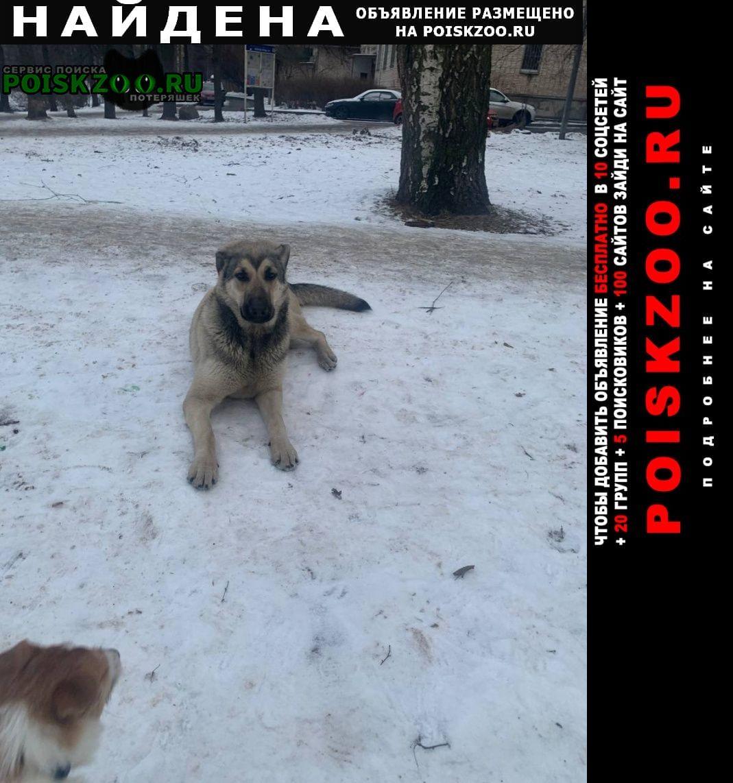 Найдена собака в районе метро черная речка Санкт-Петербург