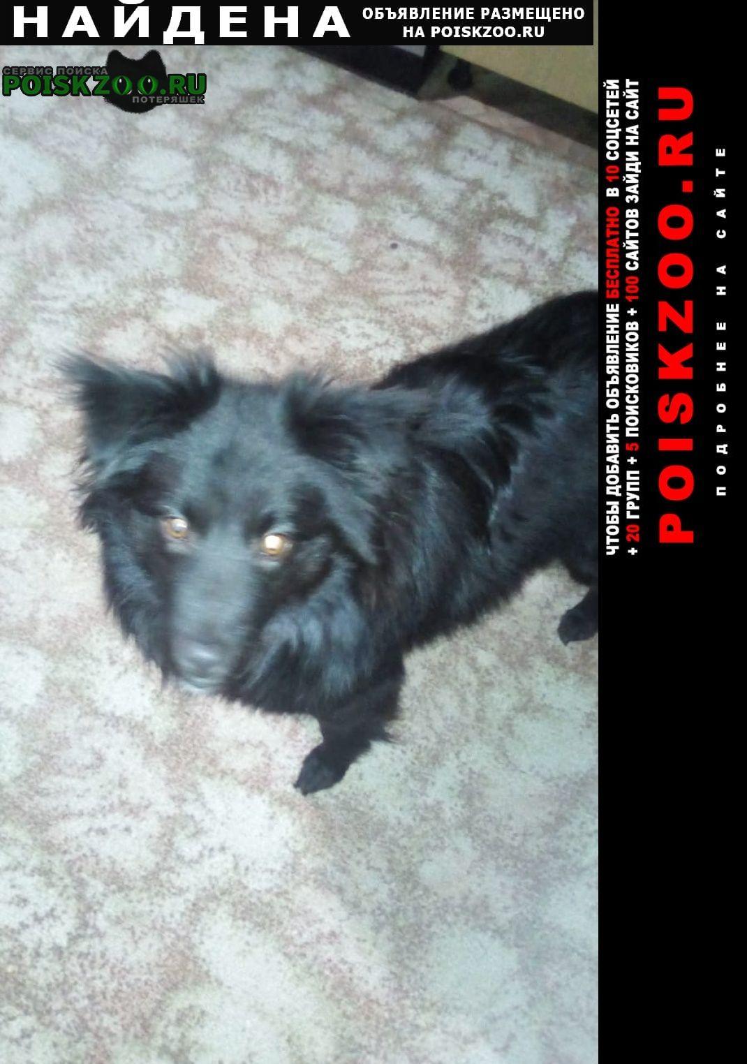 Найдена собака в районе ст.сортировки пос.7 ключей Екатеринбург