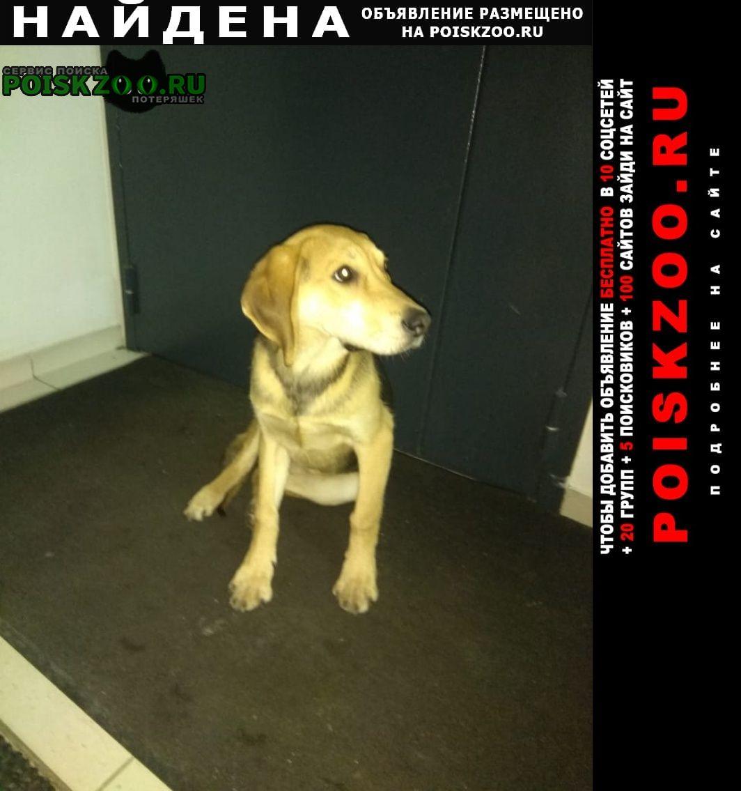 Найдена собака на руставели 25 прибился пес Санкт-Петербург