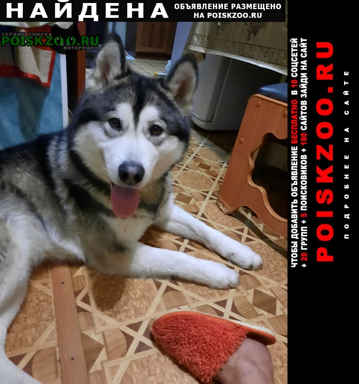Найдена собака маламут Уфа