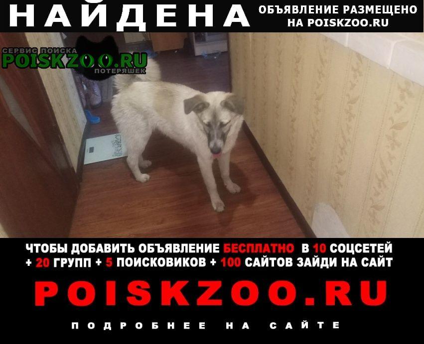 Найдена собака Чита