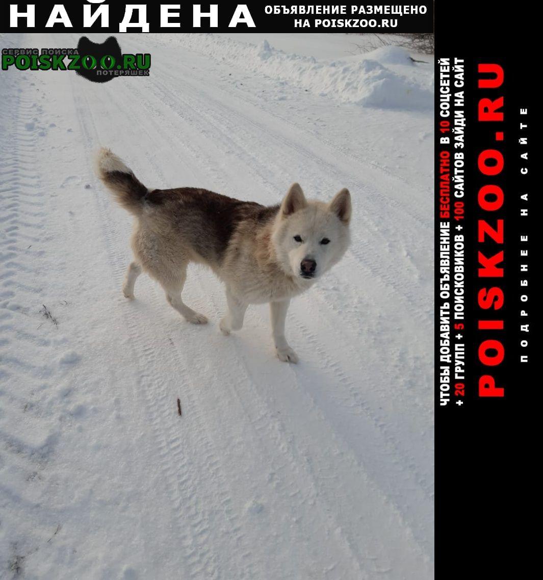 Найдена собака д. матвейково, ступинский район Ступино