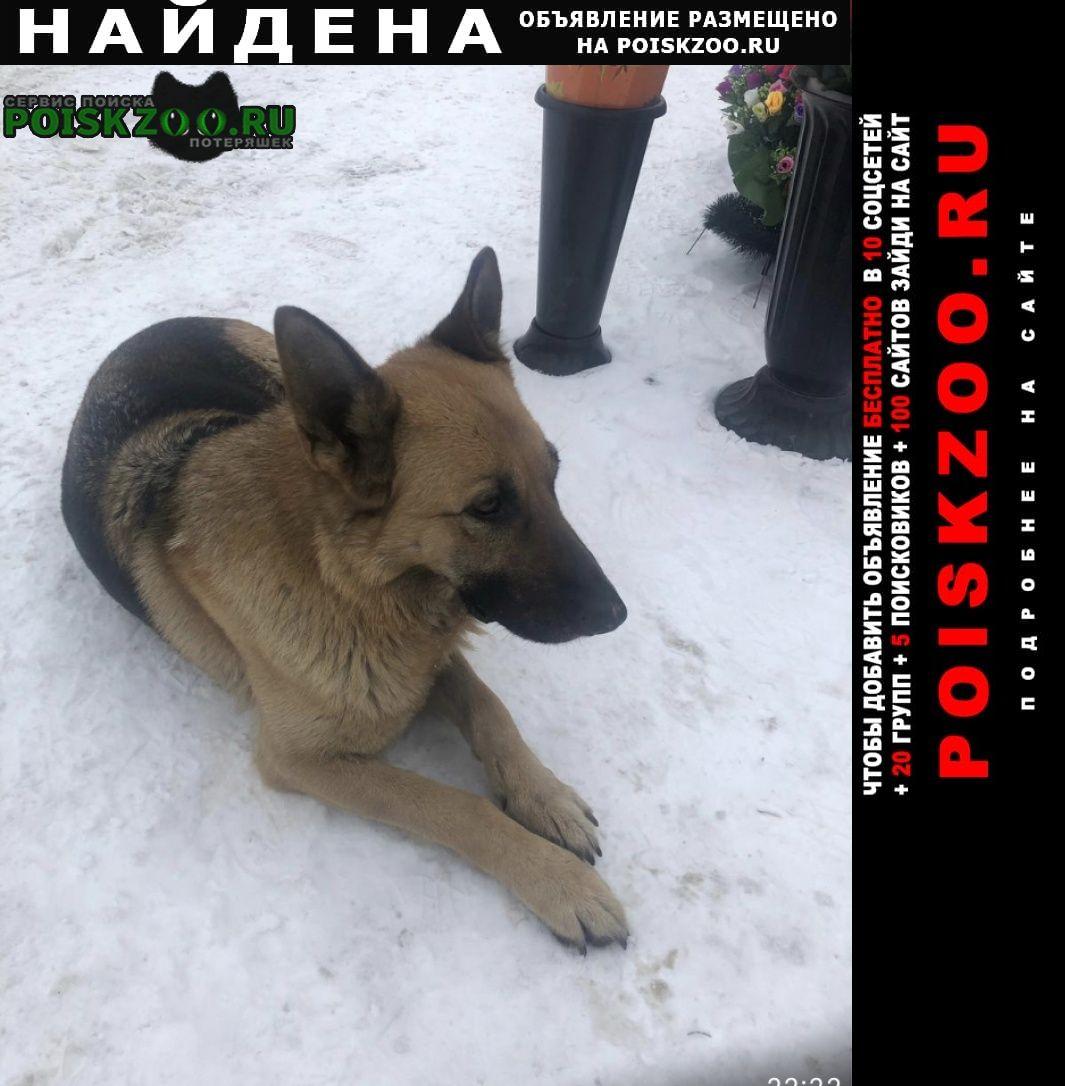 Найдена собака овчарка Раменское