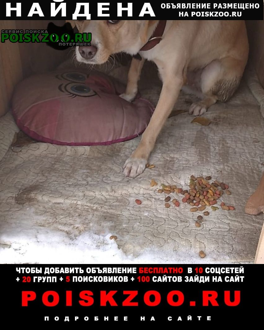 Найдена собака район 40 лет победы Краснодар