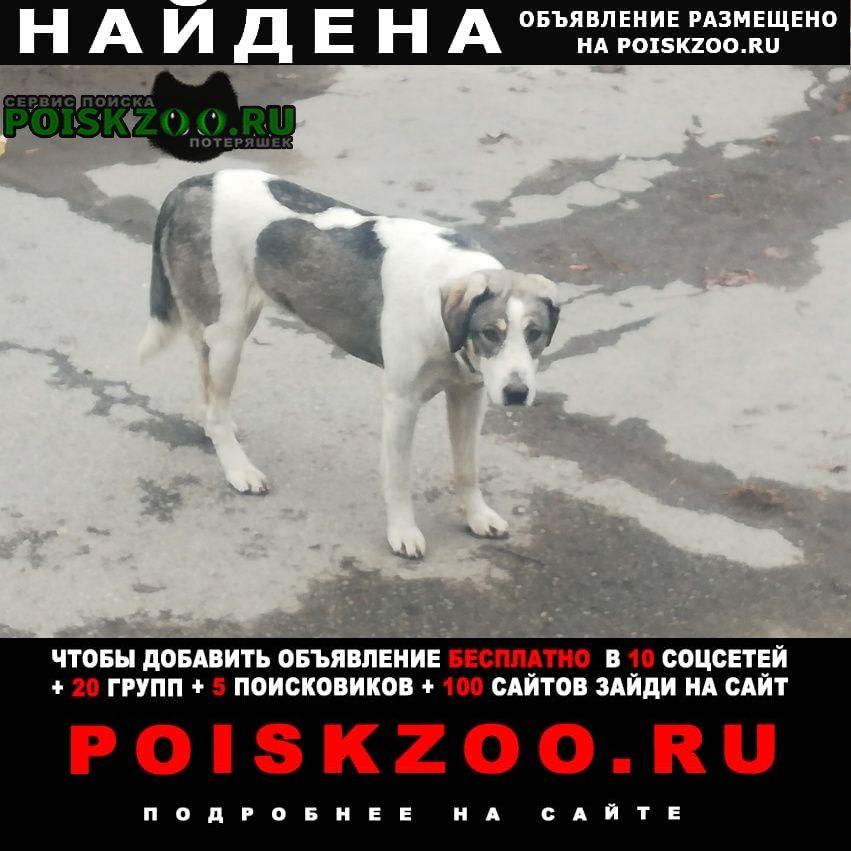 Найдена собака на на шмулевича Владикавказ