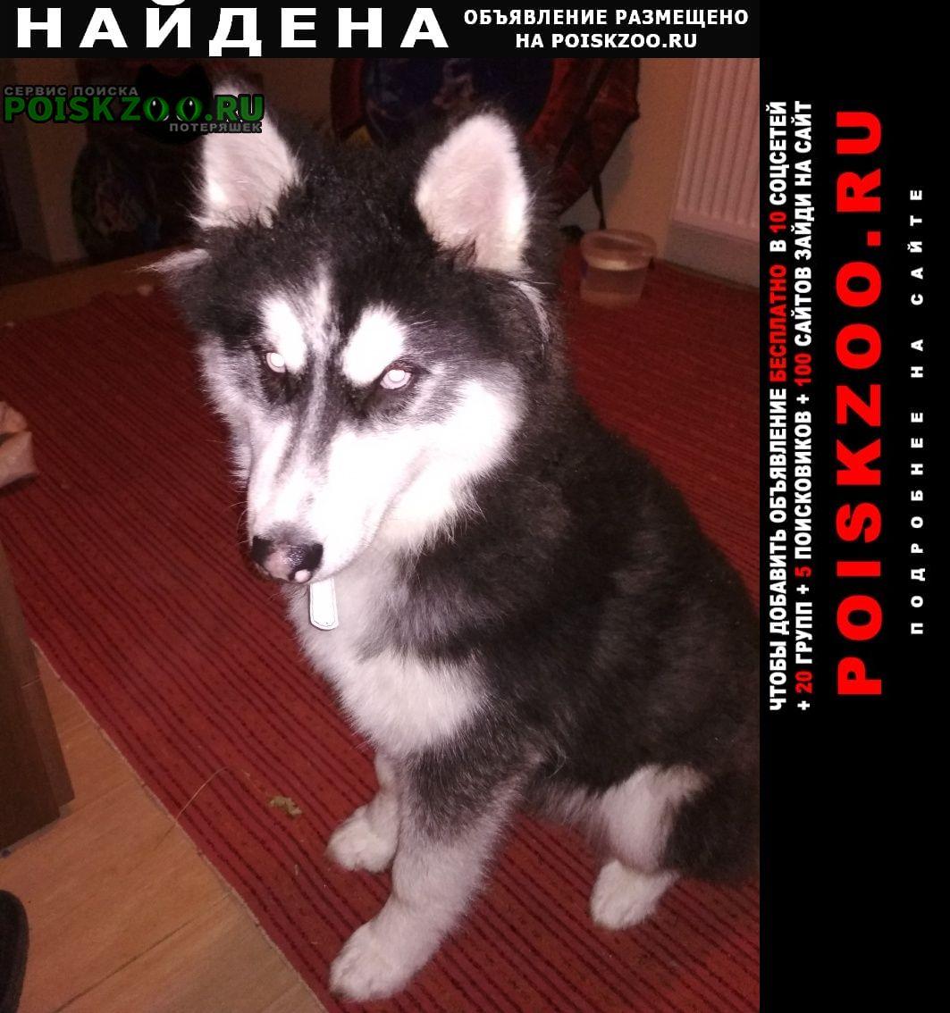 Найдена собака в п. красные горки Москва