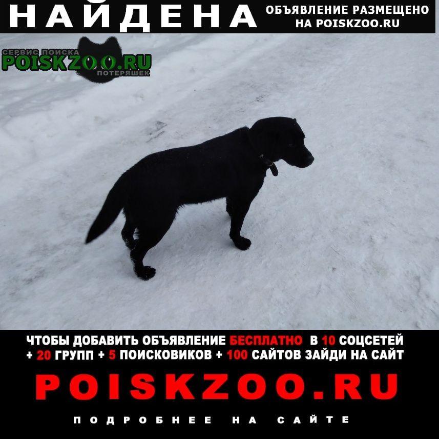 Найдена собака Выкса