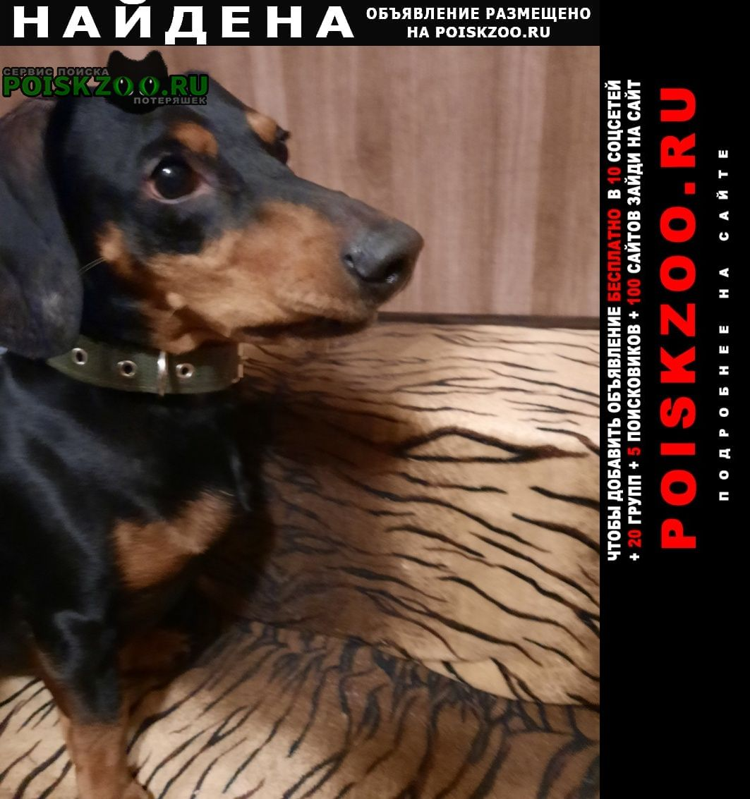 Найдена собака срочно нужен хозяин Донецк Донецкая обл.