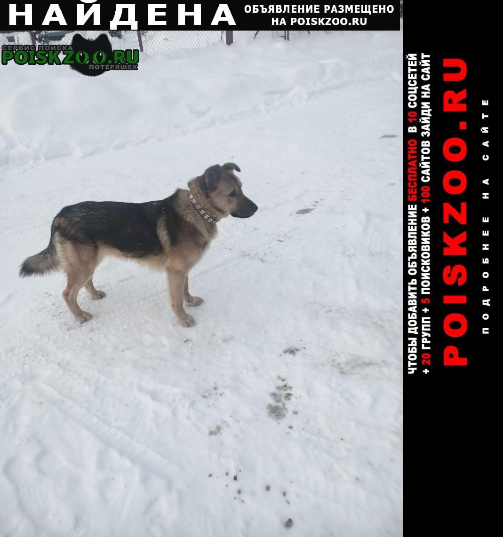 Найдена собака в районе д. полевшина Истра