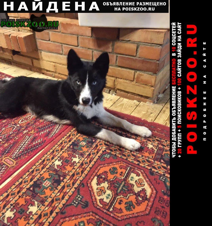 Найдена собака Волоколамск