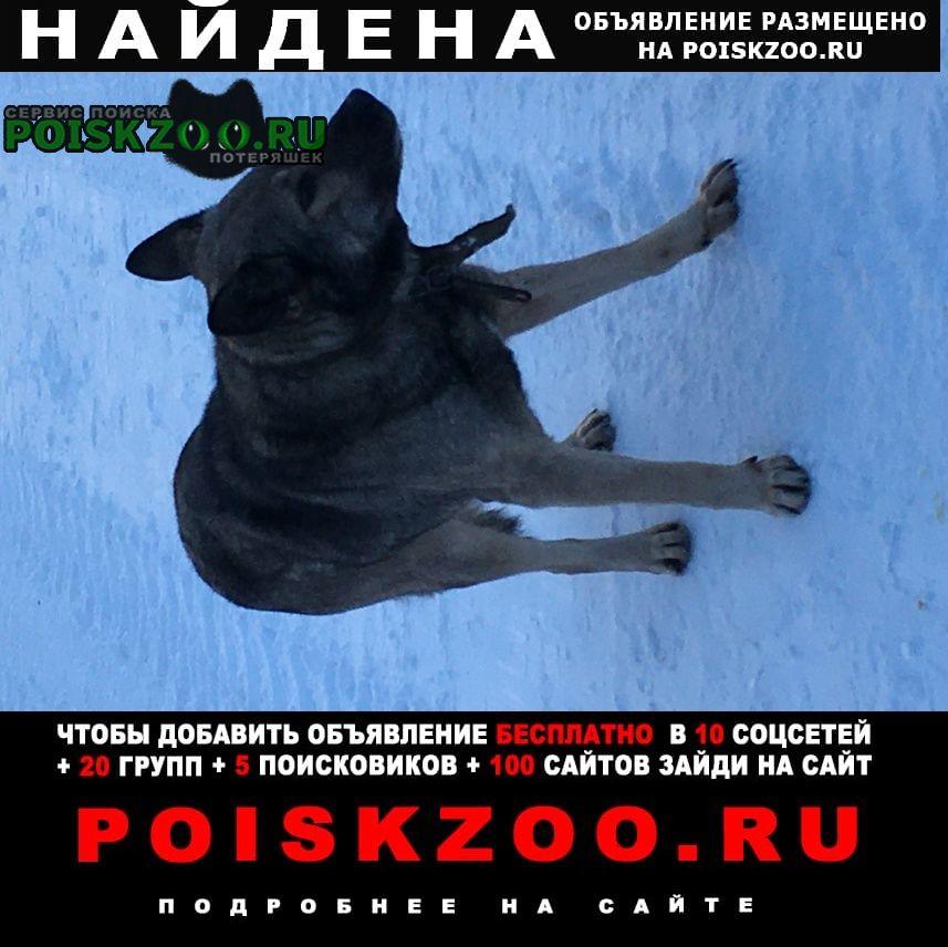 Найдена собака пёс. большой, пугливый. Сызрань