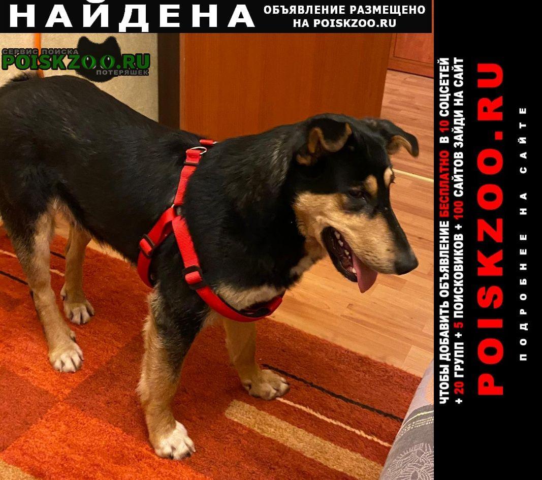 Найдена собака кузьминки Москва