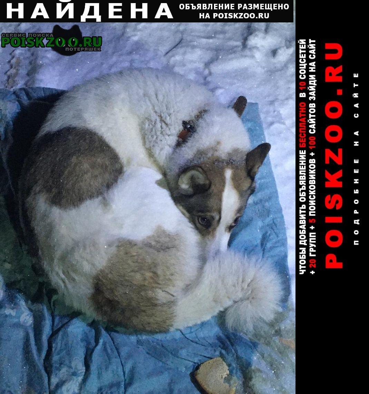 Найдена собака Верхняя Пышма