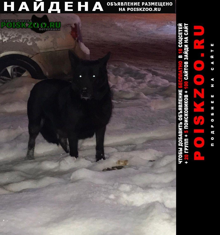 Найдена собака Раменское
