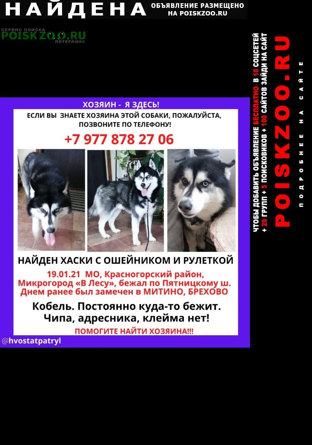 Найдена собака породы хаски Москва