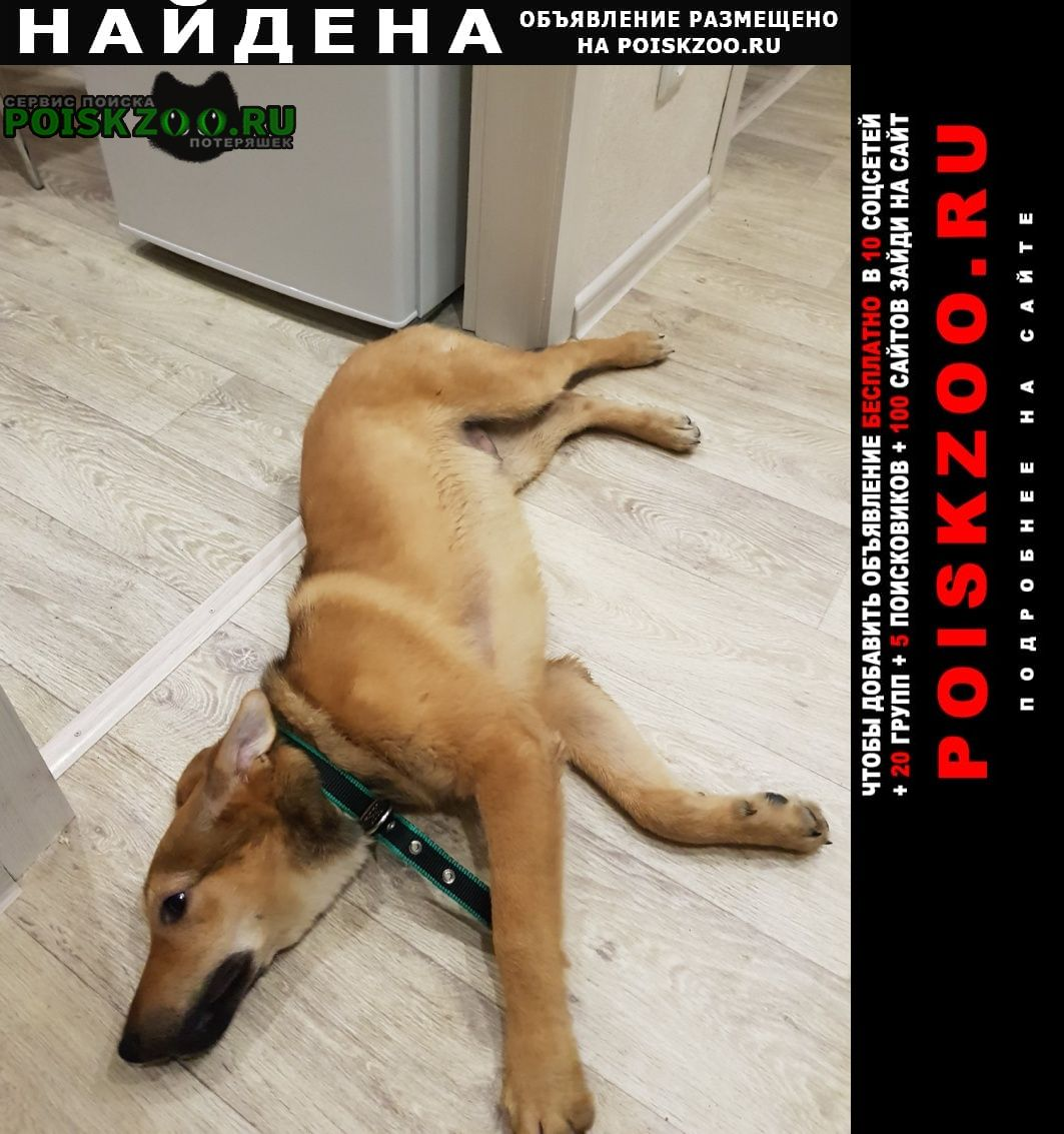Найдена собака Зеленоградск